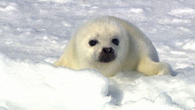 拯救北極小白仔 你我都有責任