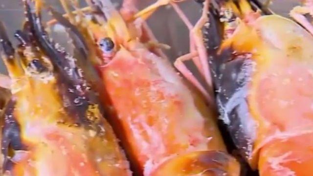 7隻就超標!吃蝦猶如吃抗生素