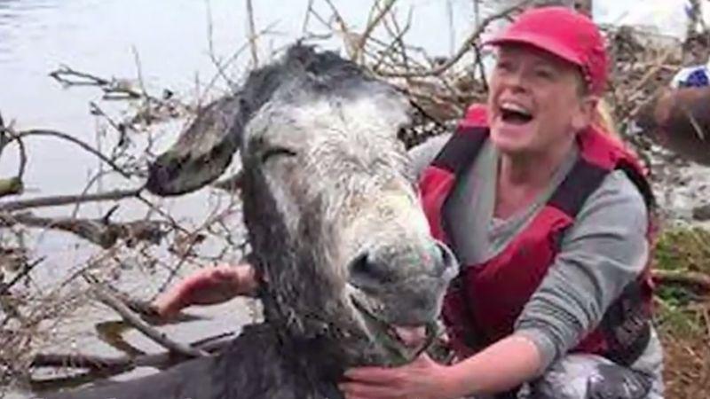 拯救驢子大作戰!牠竟微笑表達感謝之意