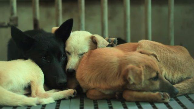 高市帶頭立法!吃犬貓肉 最重罰7.5萬!