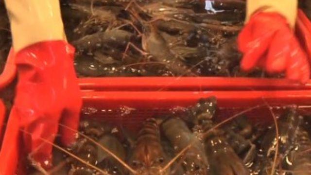 被控「死蝦當活蝦賣」老闆娘喊冤羅生門