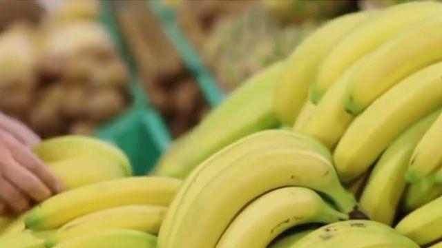 致命菌散播 全球香蕉面臨滅絕危機