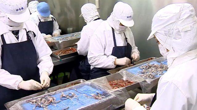 手工處理蝦仁分類 直擊小籠包名店央廚