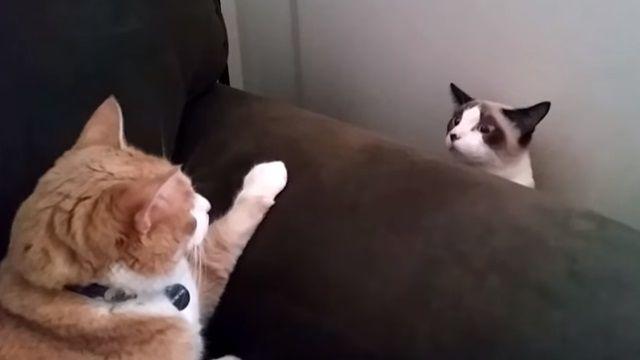 進擊?的黑白貓 撞見橘老大瞬變升降機