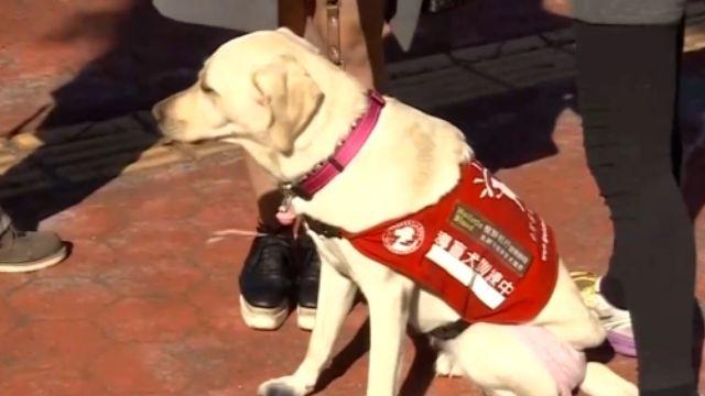 誤認導盲犬為寵物 公車司機拒載遭投訴