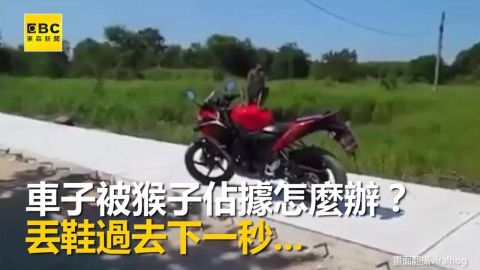 蝦咪!泰國街頭火爆打鬥 竟是人猴大戰