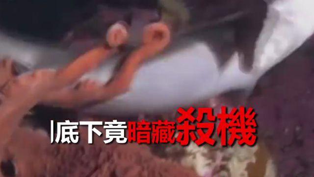 章魚哥與蟹老闆的戰爭!連鯊魚也不放過