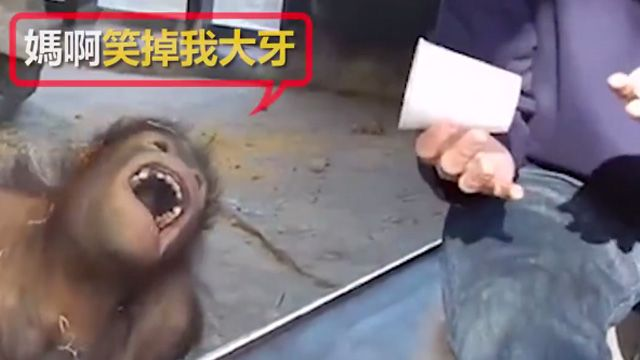 笑趴!是什麼「肉腳魔術」讓猩猩笑嗨嗨