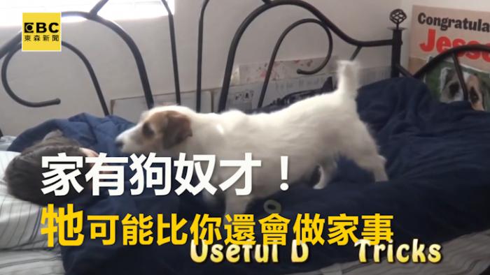 家有一狗如有一寶!牠比人還要「大心」