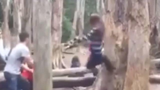 飛踢踹樹  7男女「忘憂森林拍照」胡為