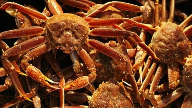 大啖螃蟹荷包變瘦 日帝王蟹量少喊漲