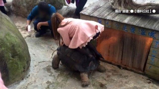 象龜當馬騎  白目挨轟!女見笑嗆三字經