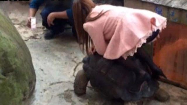 女遊客象龜當馬騎拍照 網友怒轟沒水準