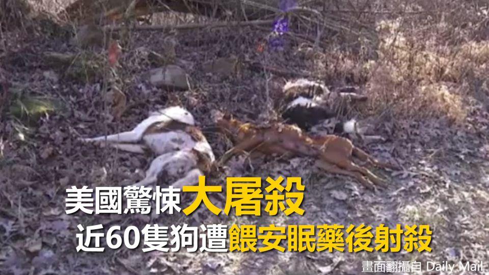 好無辜...近60隻狗遭餵安眠藥後射殺