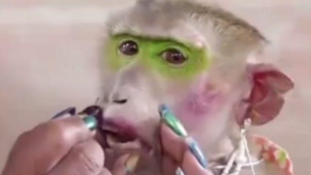 傻眼!人幫猴化妝為賺錢! 網友大暴怒