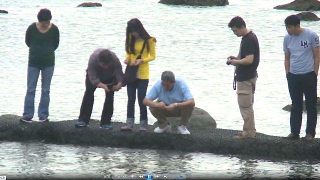 「海藻饅頭2.0」富山護魚區再開放餵魚