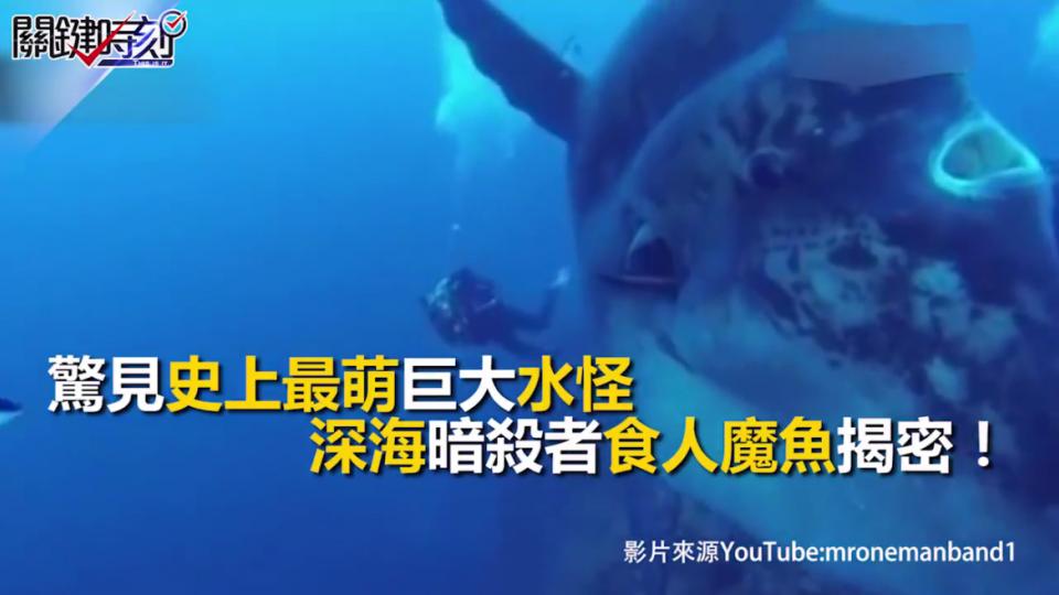 史上最萌巨大水怪 深海暗殺食人魔魚