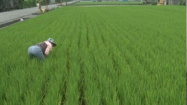 考驗台灣農民 中國零關稅農產品將叩關