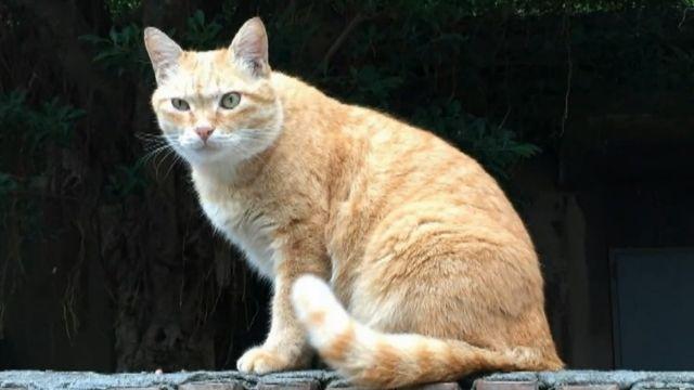 台大生虐殺貓 1.4萬人要他退學