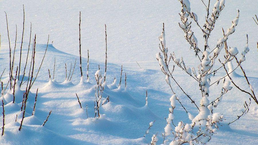 聖嬰現象! 玉山降雪創15年最晚
