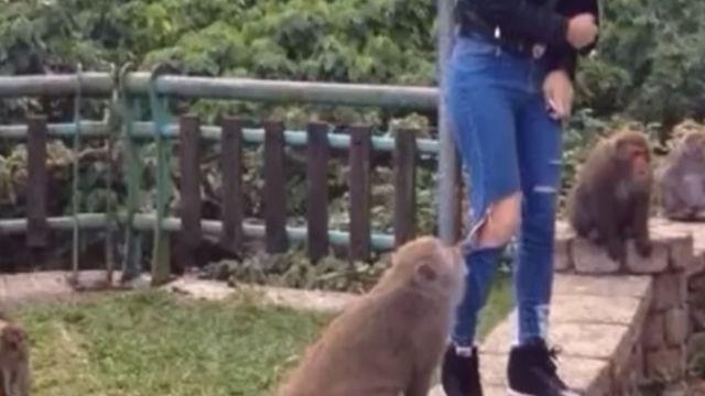 拍照遇獼猴扯褲 女子瞬間放聲尖叫