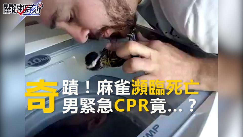 小鳥瀕臨死亡 男緊急CPR竟出現奇蹟…
