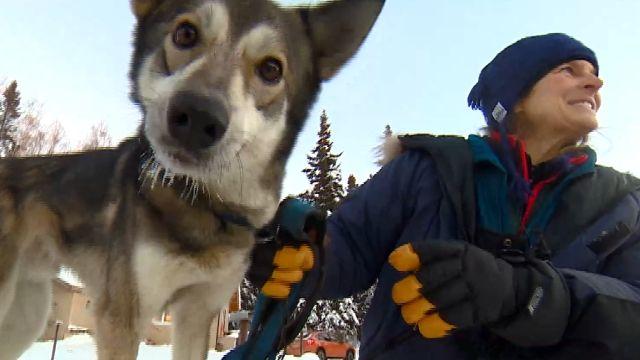 哈士奇拉雪撬 北極住民雪地馳騁靠牠
