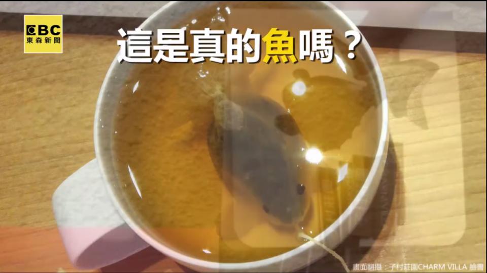 呼之欲出?茶包泡進水裡竟活了