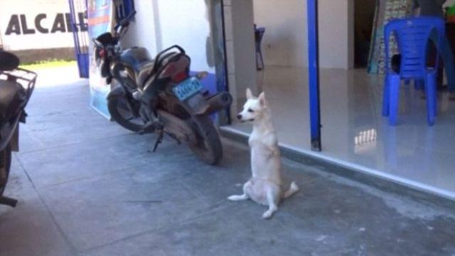 殘疾狗狗不服輸!沒有前腿學會兩腳走路