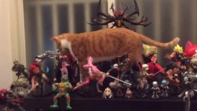貓界駭客任務!喵星人果然身手不凡!