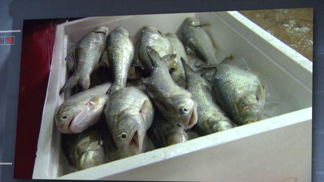 鮮美的魚肉含有香港腳藥膏的成分?