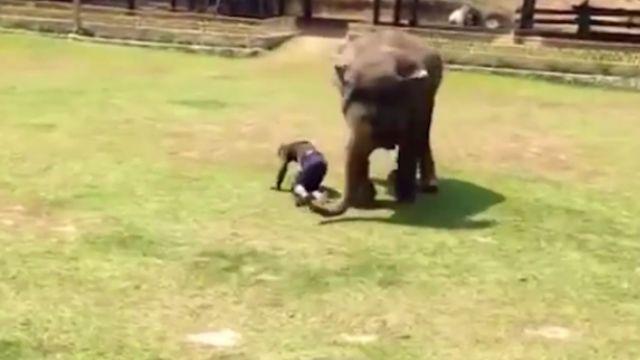 不要欺負我的他! 大象狂奔只為救……
