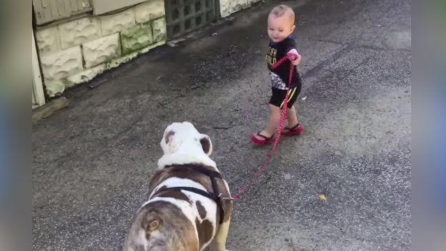憑你也想遛偶 大狗冷看小童