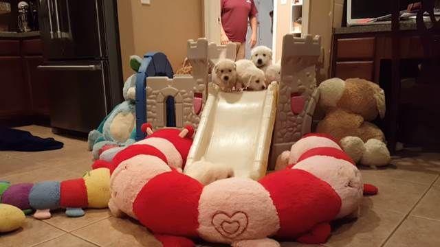 16隻小狗狗溜滑梯 萌樣超討喜