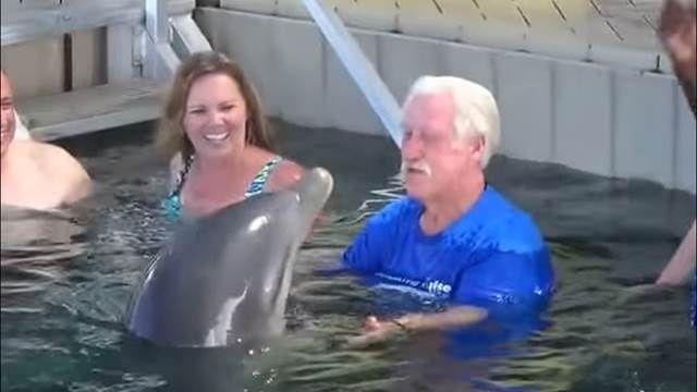 海豚智力多高? 陪你玩也會耍你