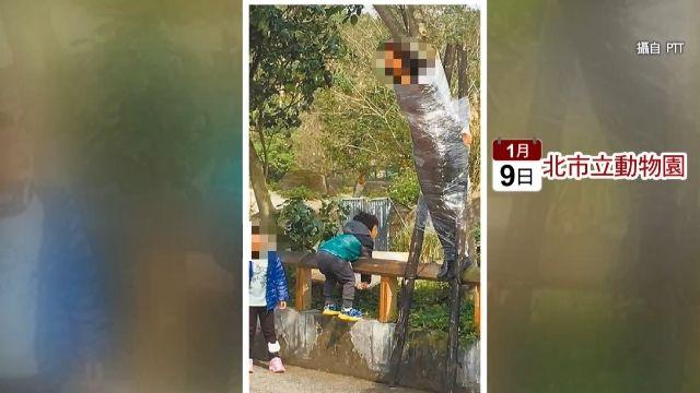 動物園驚見女綁樹 被長頸鹿掃到恐致命