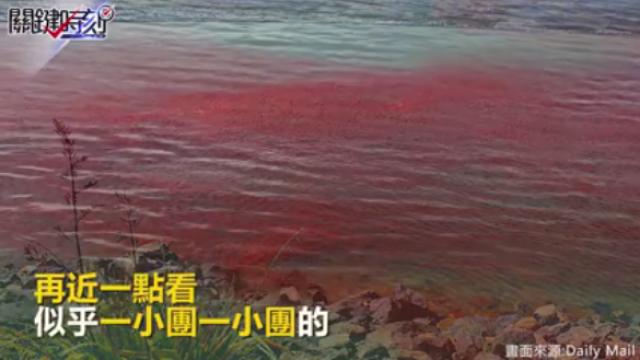 紐西蘭海域被染紅一片  竟是小龍蝦!