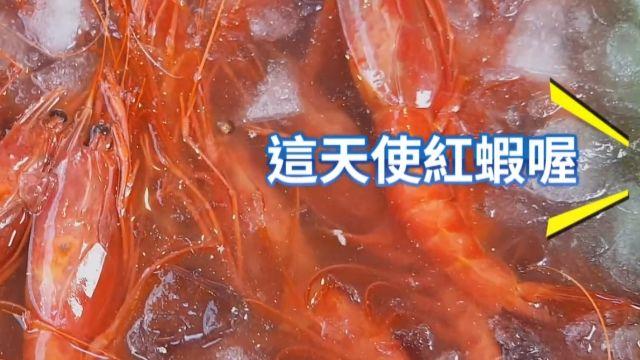 漁港海鮮賣「天使紅蝦」 誇口現撈、可生食