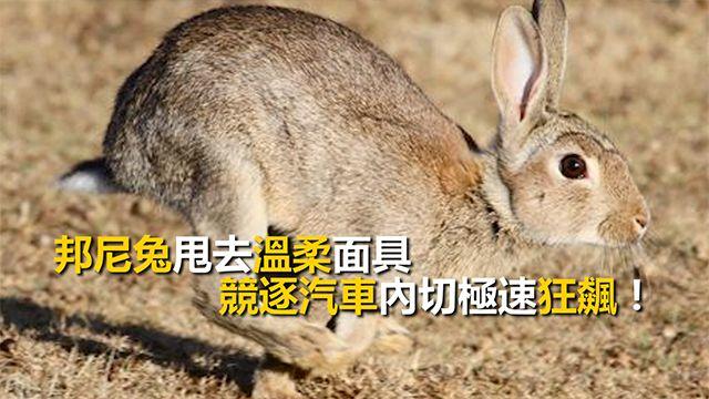 邦尼兔甩去溫柔面具 競逐汽車內切狂飆!