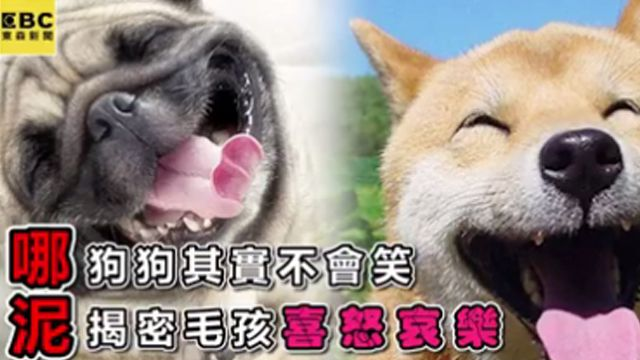 狗狗其實不會笑 揭密毛孩喜怒哀樂…