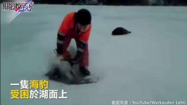 海豹受困結冰湖面 好心人上演即刻救援