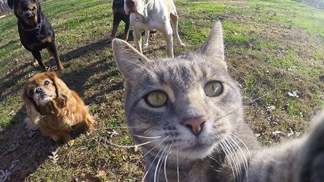 朕這才叫自拍!史上最會喬角度自拍的貓