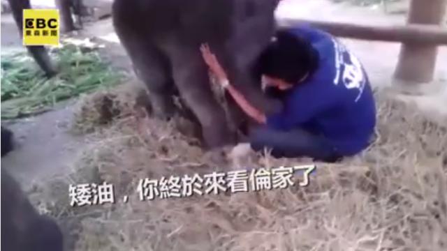 討喜!泰國小象磨蹭討拍萌翻天