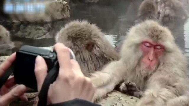 冬天牠們最上鏡 日猴泡溫泉典故!