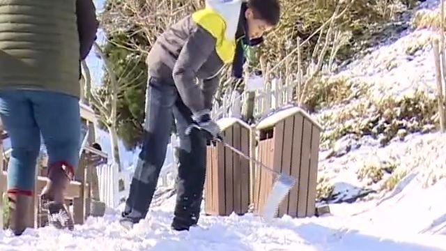 清境農場步道積雪厚 工作人員「人工鏟雪」