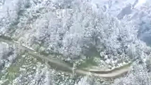 睽違13年! 武陵農場降雪 民眾趕追雪