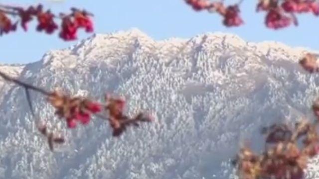 寒流後首日 清境融雪 遼闊山景一覽無遺