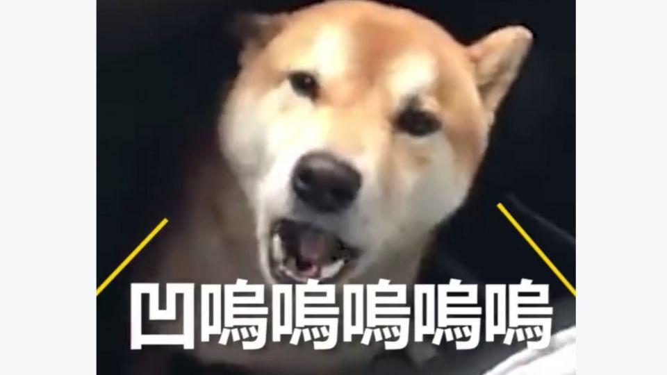 柴犬聽到關鍵字就崩潰!讓主人哭笑不得