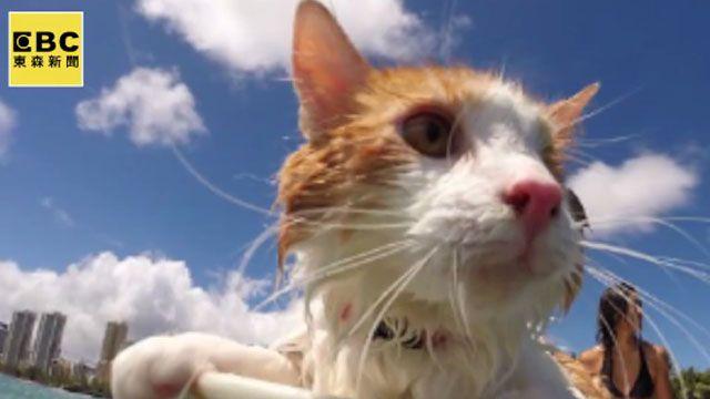 超萌獨眼貓 海上衝出一片天