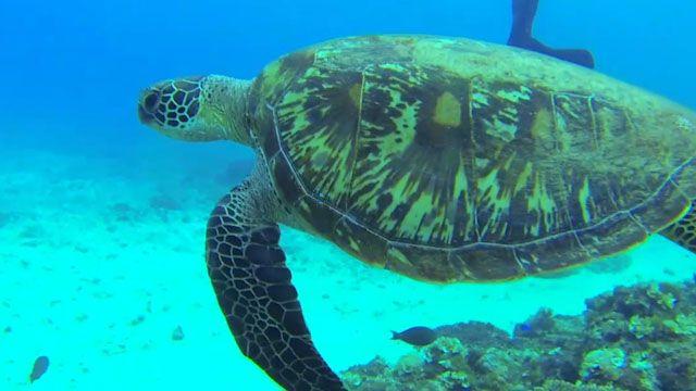 絕美珊瑚礁島 保護綠蠵龜大作戰!